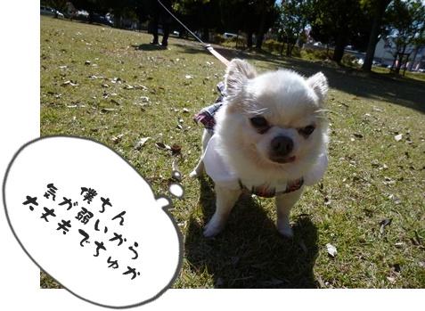 2012-12-1ちぃ坊103