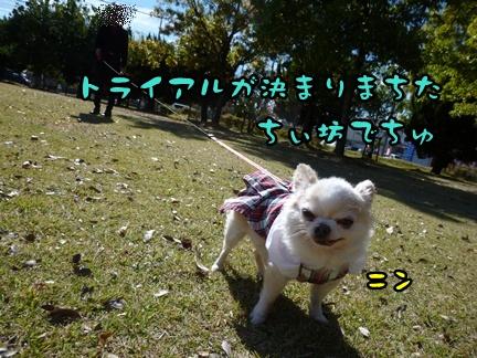 2012-12-1ちぃ坊102