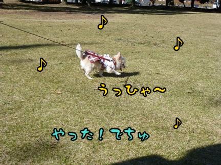 2012-12-1ちぃ坊095