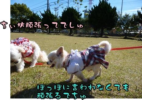 2012-12-1ちぃ坊084