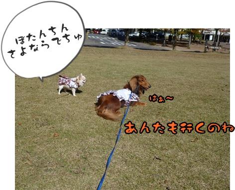 2012-12-1ちぃ坊098