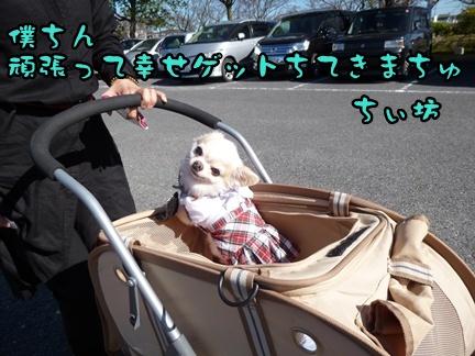 2012-12-1ちぃ坊080