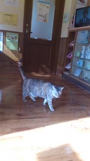 2012-12-1福島猫DSC_0216