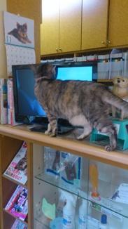 2012-12-1福島猫DSC_0209