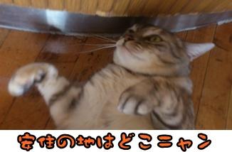 2012-12-1横福島猫DSC_0231