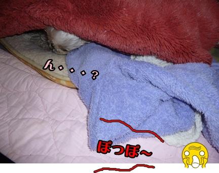 2012-12-5ぽっぽ紛失009