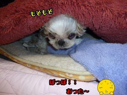 2012-12-5ぽっぽ紛失013