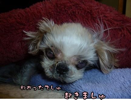 2012-12-5ぽっぽ紛失008