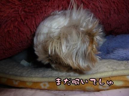 2012-12-5ぽっぽ紛失006