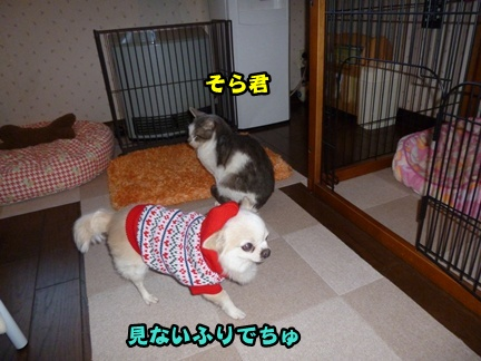 2012-12-1ちまきに006