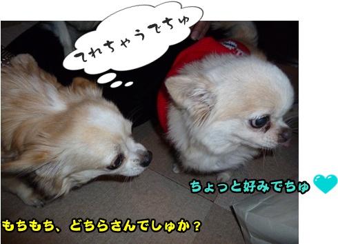 2012-12-1ちまきに001