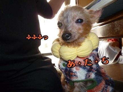 2012-12-14レイシー移動030