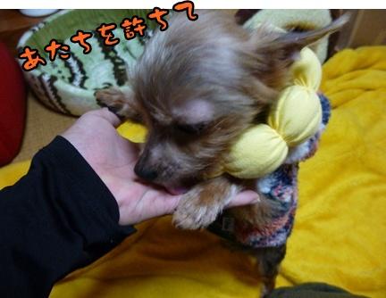 2012-12-14レイシー移動025