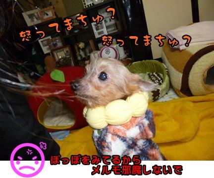 2012-12-14レイシー移動023