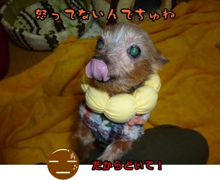 2012-12-14レイシー移動024