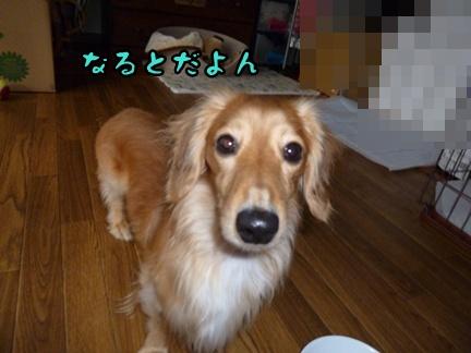 2012-12-17天使036