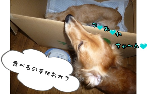 2012-12-17天使015