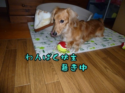 2012-12-17天使050