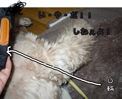 23-11-13a048.jpg