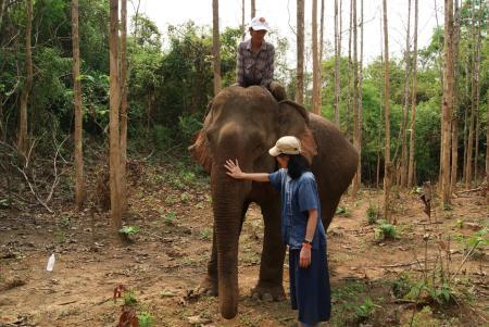 elephant camp3