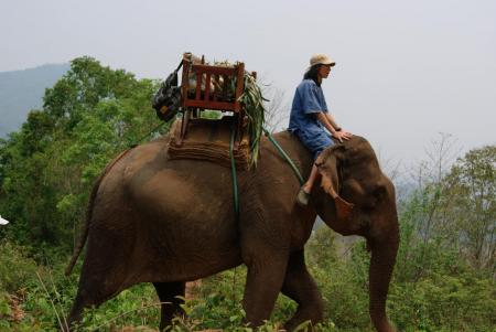 elephant camp1