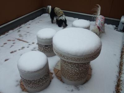 初めての雪です