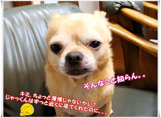 006hakujou.jpg