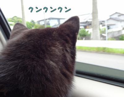 0zxjCB3EtIHDUme_convert_20120529094954.jpg