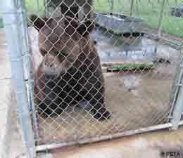 bear0.jpg