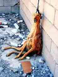 dog2_20121029232345.jpg