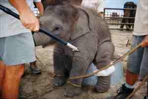 elephant1_20121218221955.jpg