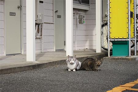 春日市の猫01