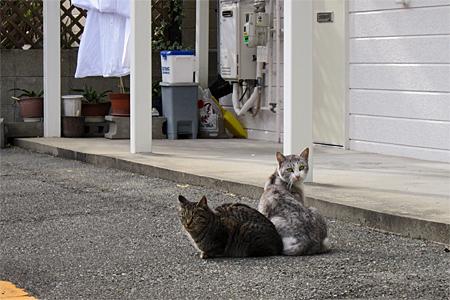 春日市の猫02