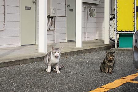 春日市の猫03
