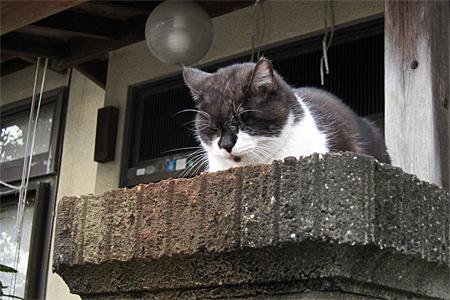 南区の猫01