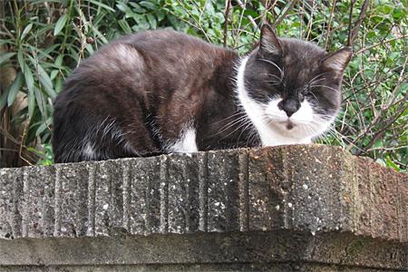 南区の猫02
