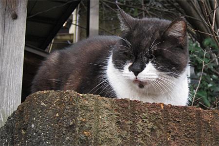 南区の猫03