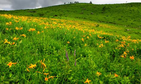 車山高原のニッコウキスゲの草原