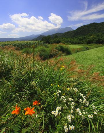 ススキが穂を出しはじめた高原風景