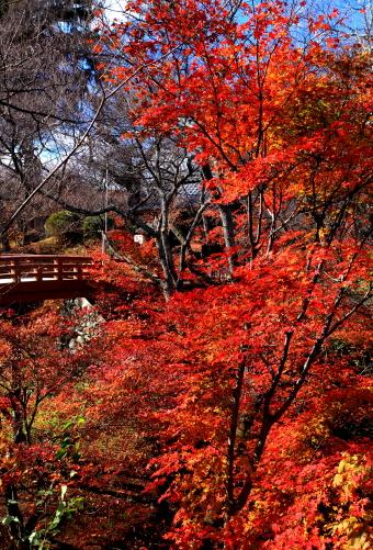 桜雲橋とモミジ