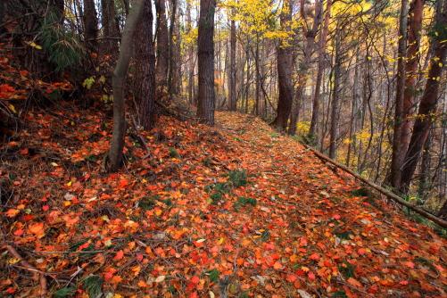 落ち葉の降り積もった登山道は足に優しかった
