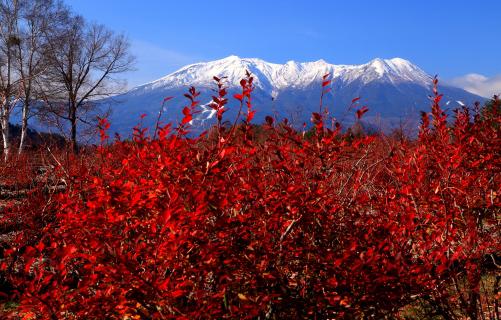 ブルーベリーの紅葉と霊峰御岳