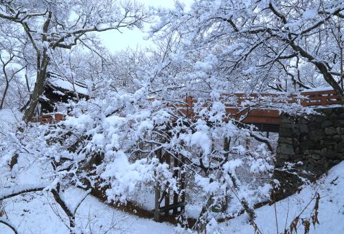 積雪の高遠城址公園桜雲橋