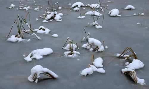 雪の積もった堀