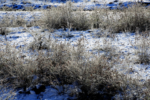 霧氷の黒川