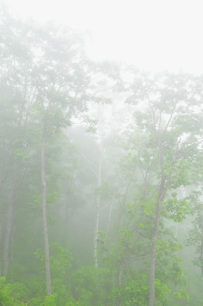 志賀高原2