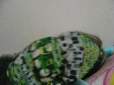 DSC09228_convert_20100807213232.jpg