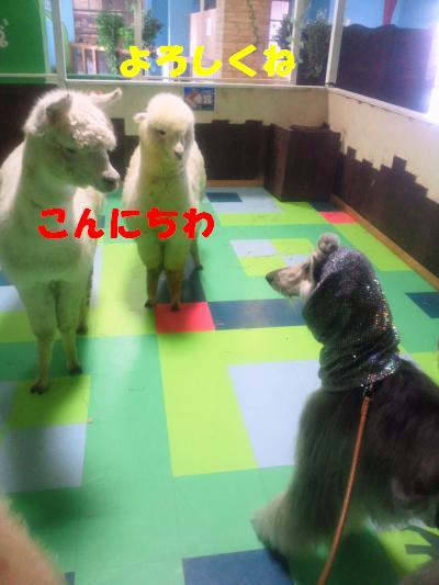 NEC_0099_convert_20101116222205.jpg
