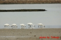 クロツラヘラサギ 20131225 1