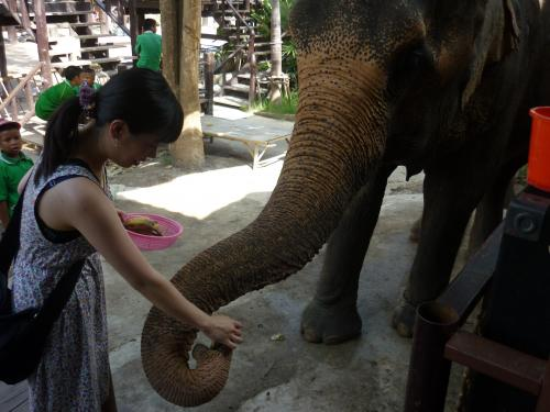 象と幸せな私